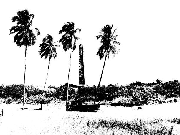 Palms threshold with white background copy